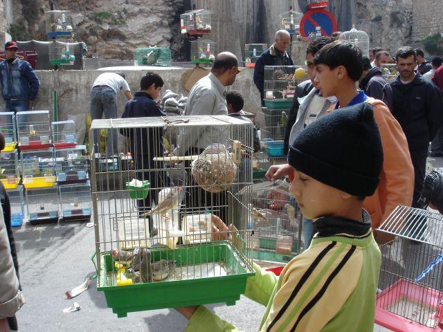 Zdjęcia: Amman, Ali, JORDANIA