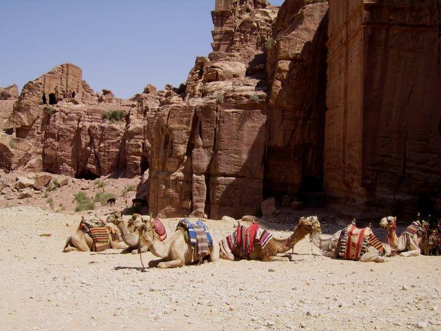 Zdjęcia: Petra, Wielbłady w Petrze, JORDANIA