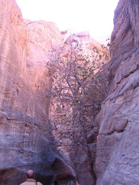 Zdjęcia: Petra, płd-zach Jordania, Skały Petry, JORDANIA