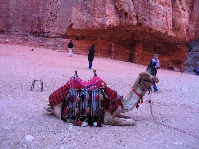 Zdjęcia: Petra, pld-zach Jordania, odpoczywa, JORDANIA