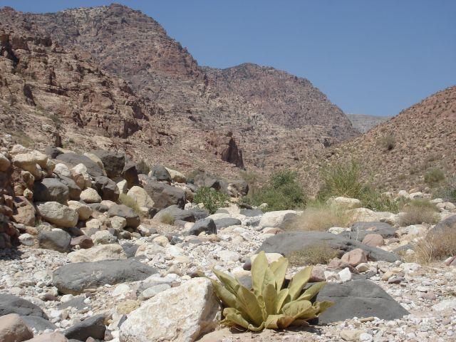 Zdjęcia: Vadi Dana, pora sucha, JORDANIA
