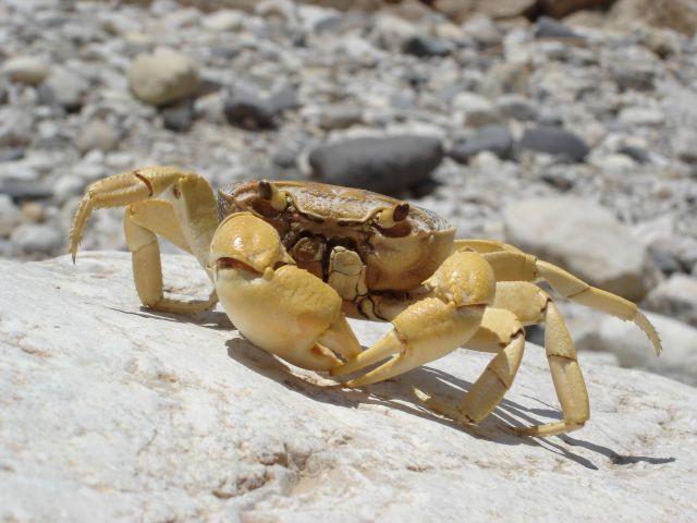 Zdjęcia: Vadi Mujib, krab, JORDANIA