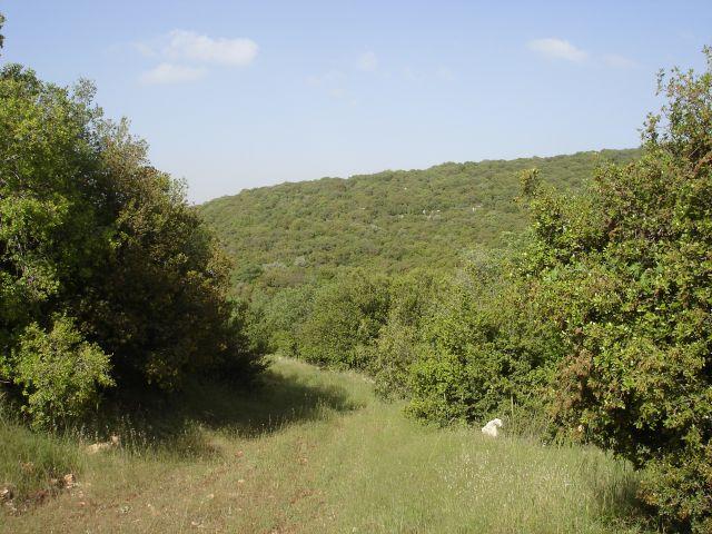 Zdjęcia: Adzlun, Park Narodowy Adzlun, JORDANIA