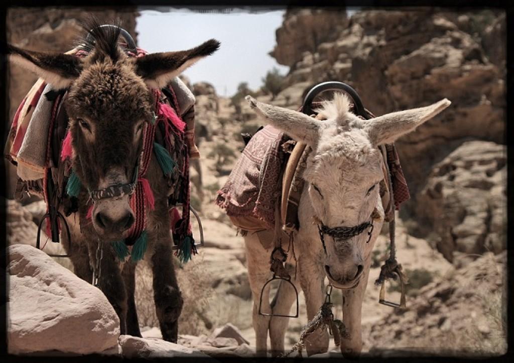 Zdjęcia: Petra, osiołki, JORDANIA