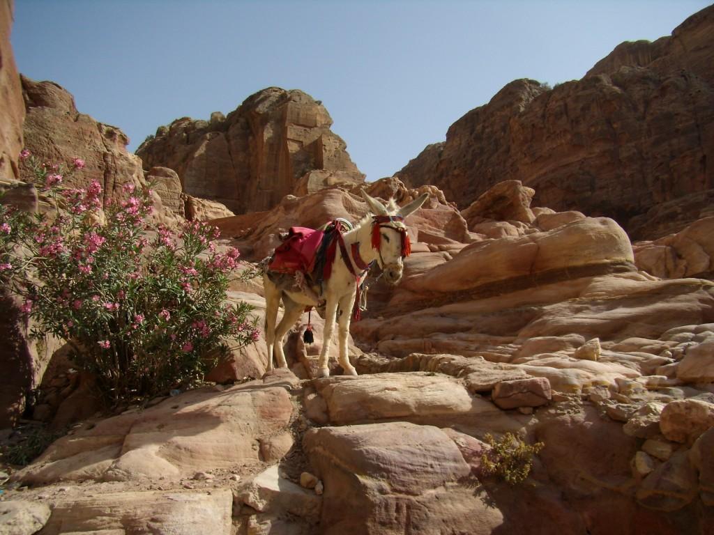 Zdjęcia: wawóz, Petra, też się zmęczył, JORDANIA