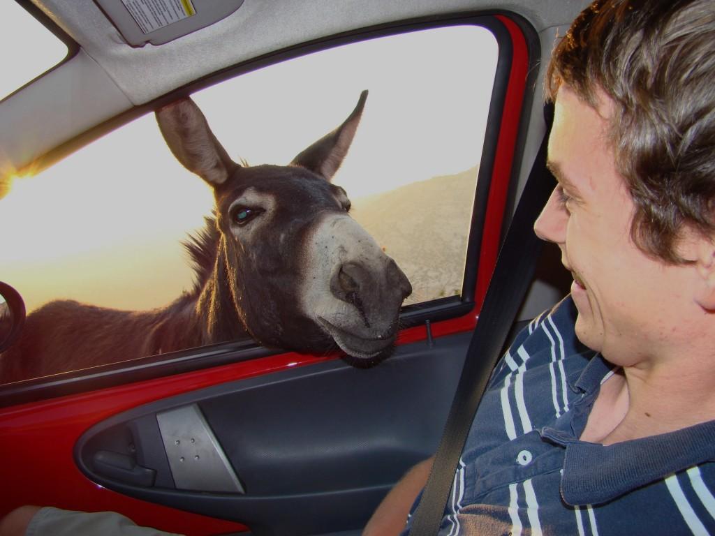 Zdjęcia: w drodze, Dana, autostopowicz, JORDANIA