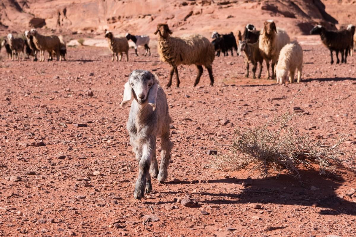 Zdjęcia: Wadi Rum, Wadi Rum, Modeleczka, JORDANIA