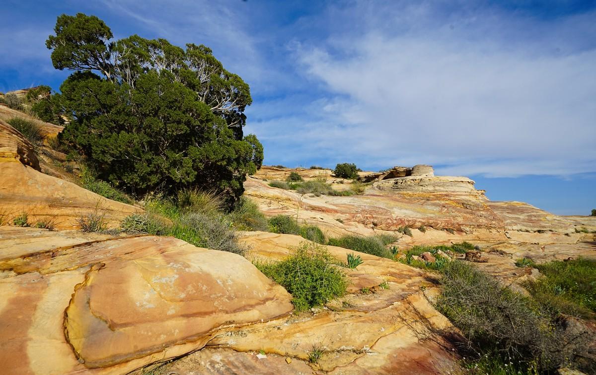 Zdjęcia: Dana, Tafilah, Krajobraz z drzewkiem, JORDANIA