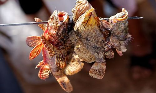 Zdjęcie JORDANIA / - / Aqaba / Nadziane potwory