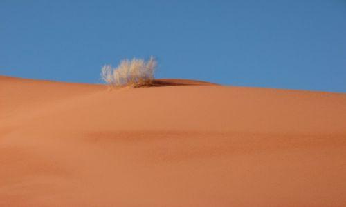 Zdjęcie JORDANIA / Wadi Ram / Pustynia / Krzew