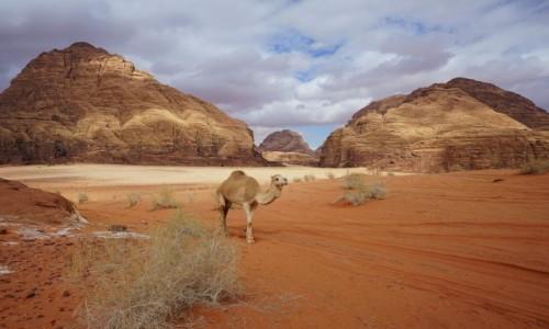 JORDANIA / Pustynia Wadi Rum / . / Lokalny kicz