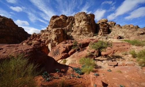 Zdjęcie JORDANIA / Muhafaza Ma'an / Petra  / Życie na skałach