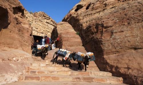 Zdjęcie JORDANIA /  Muhafaza Ma'an / Petra / Transport pomarańczy