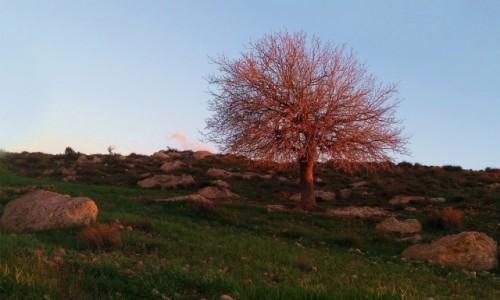 Zdjęcie JORDANIA / Tafilah / Dana / Przy zachodzącym słońcu