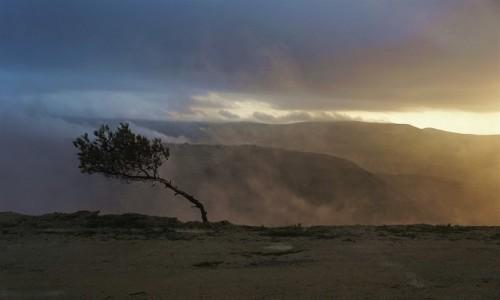 Zdjecie JORDANIA / Muhafaza Ma'an  / Dana / W drodze do Wadi Mussa