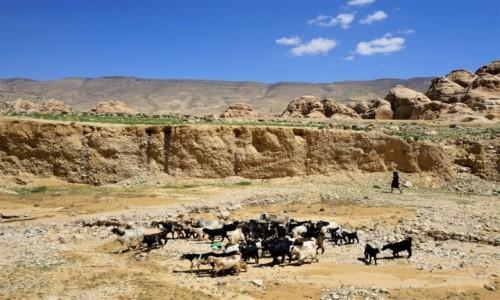 Zdjęcie JORDANIA /  Muhafaza Ma'an / Mała Petra  / Stadko w drodze