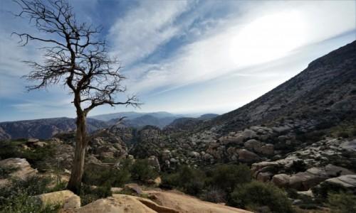 Zdjęcie JORDANIA / Tafilah / Rezerwat biosfery Dana / Drzewo