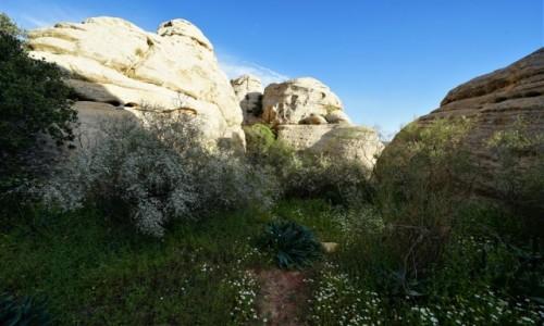 Zdjęcie JORDANIA / Tafilah / Rezerwat biosfery Dana / Dokąd poprowadzisz mnie ścieżko