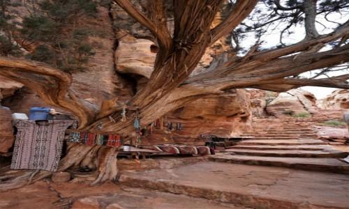 Zdjęcie JORDANIA / Muhafaza Ma'an / Petra / Kramik pod drzewem