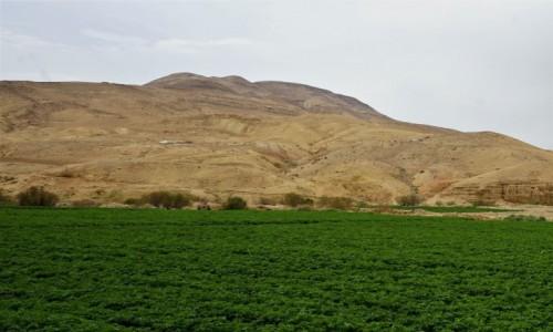 Zdjęcie JORDANIA / Morze Martwe / Długo, długo nic i wreszcie zielone pole / Uprawa ziemniaków na pustyni