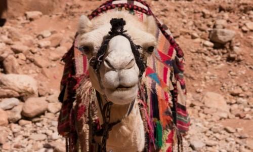 JORDANIA / Wadi Rum / Wadi Rum / Dziecko pustyni
