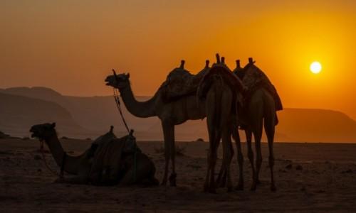 Zdjecie JORDANIA / Akaba / Wadi Rum / Pustynia Wadi Rum