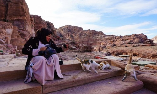 Zdjecie JORDANIA / Muhafaza Ma'an / Petra / Karmicielka kotów