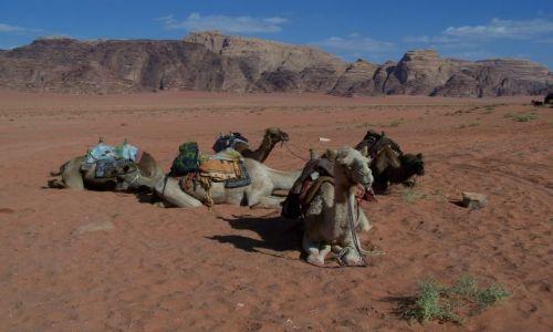 Zdjecie JORDANIA / pd. Jordania / Wadi Rum / Wielbłądy z Wadi Rum