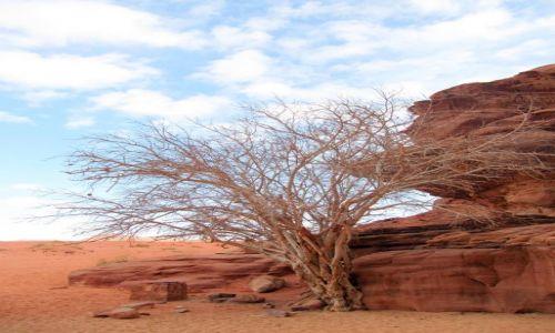 Zdjęcie JORDANIA / Wadi Rum / pustynia / Na pustyni