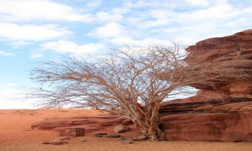 Zdjecie JORDANIA / Wadi Rum / pustynia / Na pustyni