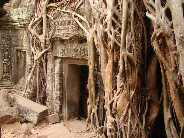 Zdjęcia: Angkor - świątynia Ta Prohm , w korzennym uścisku , KAMBODżA