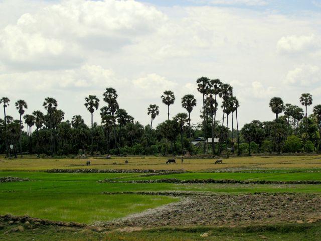Zdjęcia: East Mebon, Bantay Srei, pola, KAMBODżA