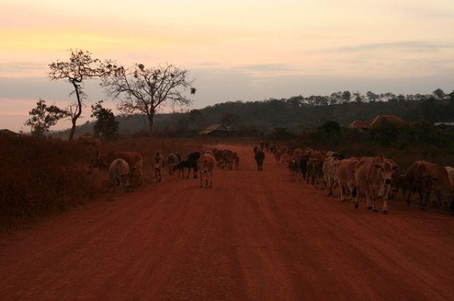 Zdjęcia: Mondulkiri, Przed Zachodem słonca, KAMBODżA