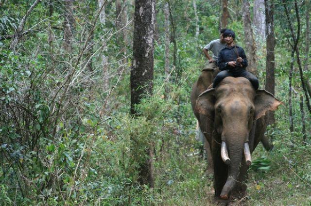 Zdjęcia: Mondulkiri, Na słoniu przez dżunglę, KAMBODżA