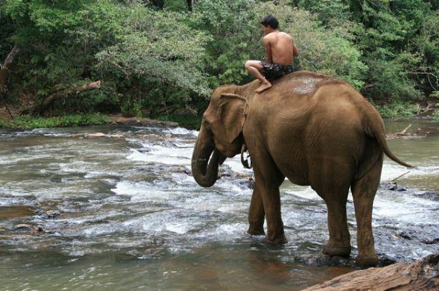 Zdjęcia: Mondulkiri, Słoń idzie do kapieli, KAMBODżA