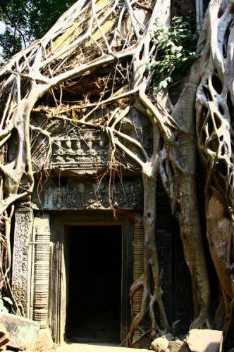 Zdjęcia: Angkor, Ta prohm, KAMBODżA