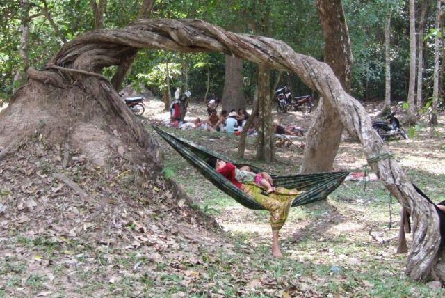 Zdjęcia: Siem Reap, Siem Reap, Pora karmienia, KAMBODżA
