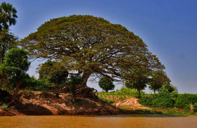 Zdjęcia: jEZIORO  TONIE SAP, * * *, KAMBODżA
