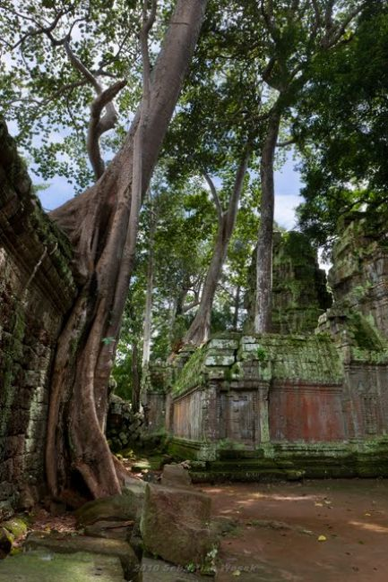 Zdjęcia: Angkor, Siem Reap Province, Ta Prohm, KAMBODżA