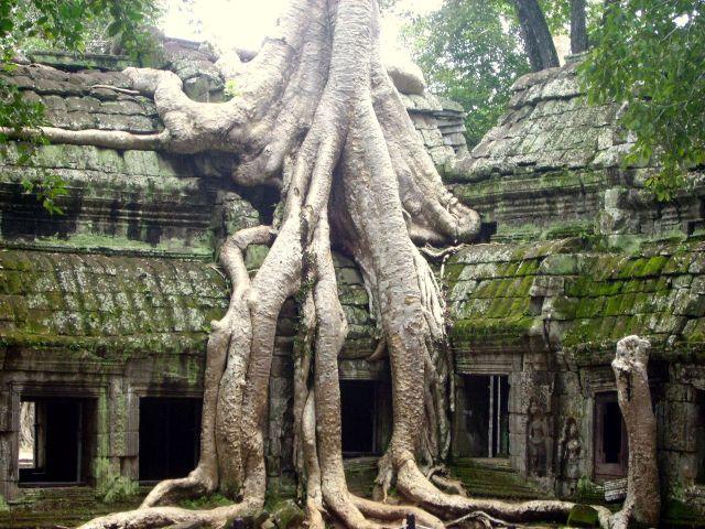 Zdjęcia: światynia Ta Prohm, okolice Siem Reap,  w twardym uścisku dżungli, KAMBODżA