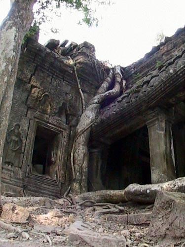 Zdj�cia: Swiatynie Angkor, TaProhm - drzewo, KAMBOD�A