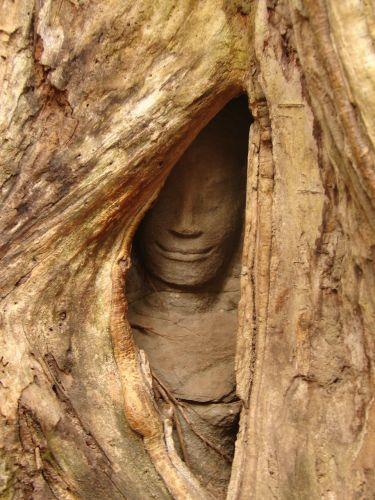 Zdjęcia: Angkor, Wśród korzeni drzew , KAMBODżA