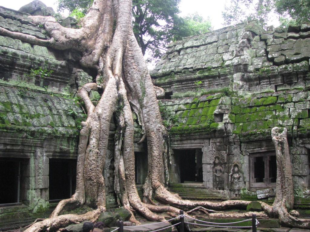 Zdjęcia: Angkor, Angkor, Stare drzewa w starej świątyni, KAMBODżA