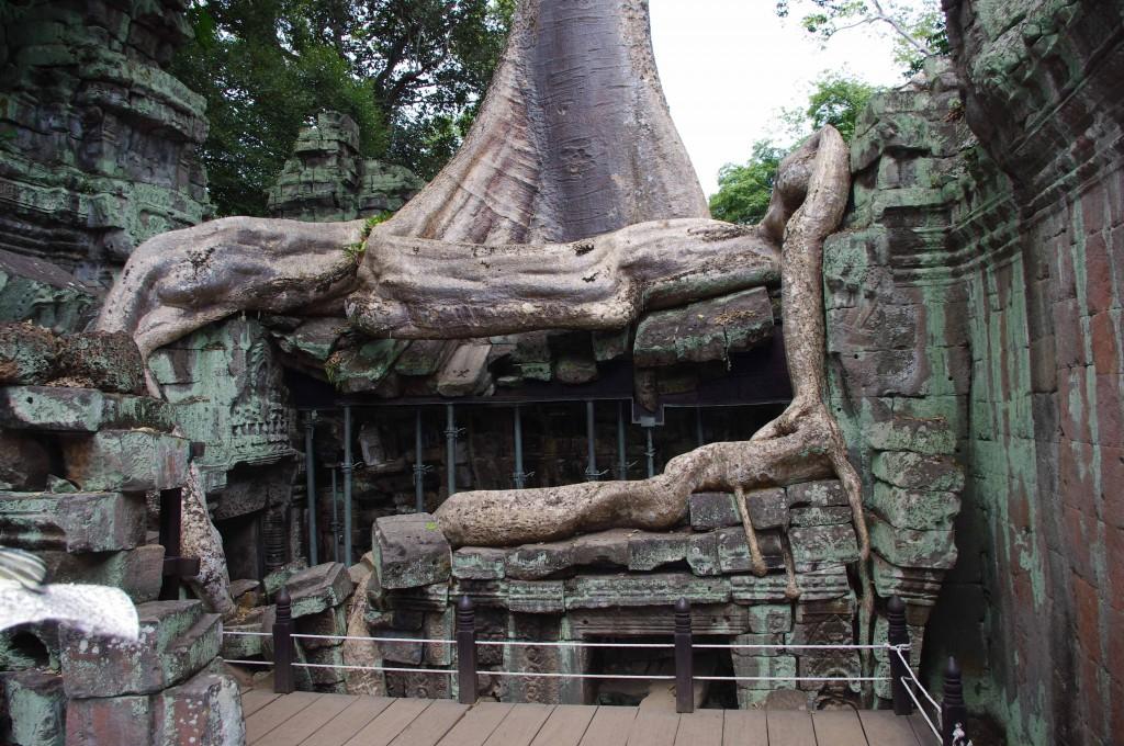 Zdjęcia: Angkor, Siem Reap, Świątynia Ta Prohm, KAMBODżA