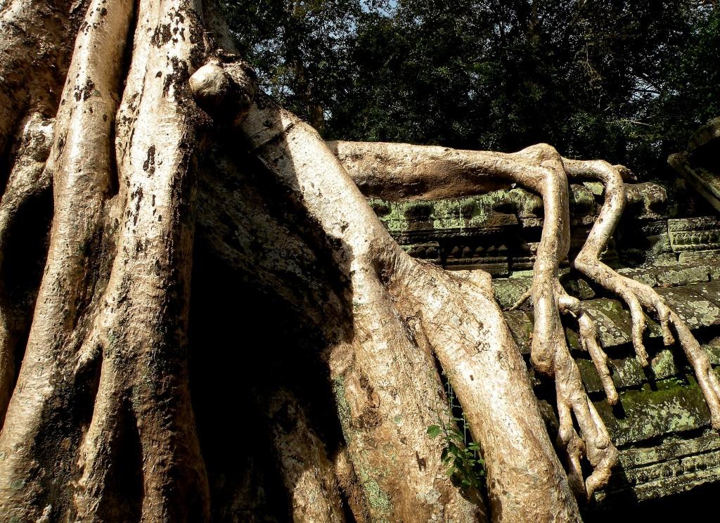 Zdjęcia: świątynia Ta Prohm, Angkor, W obięciach drzewa, KAMBODżA