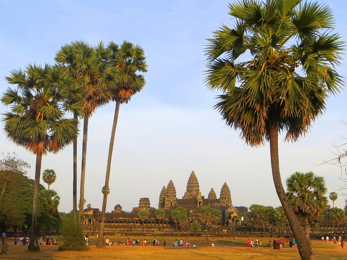Zdjęcia: Angkor Wat, Prowincja Siem Reap, Za palmami, KAMBODżA