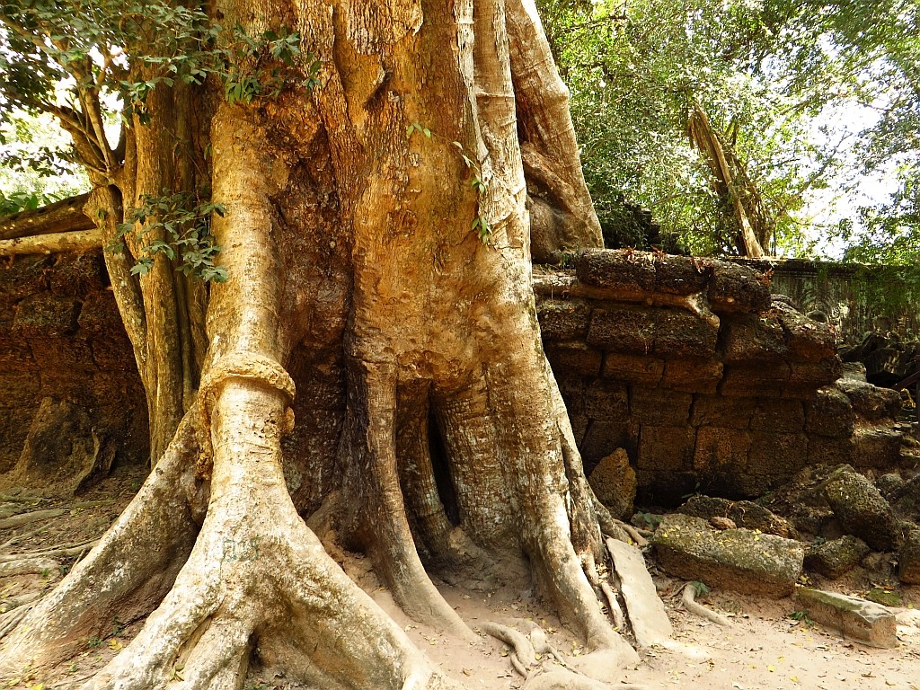 Zdjęcia: okolice Siem Reap, Angkor, Świątynia Ta Prohm - walka z przyrodą, KAMBODżA
