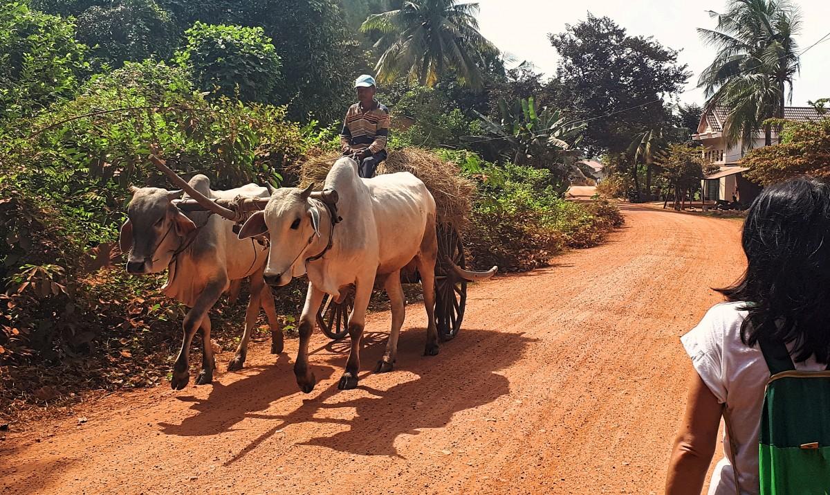 Zdjęcia: okolice Kampong Trach, okolice Kampotu, Z życia na wsi w Kambodży, KAMBODżA