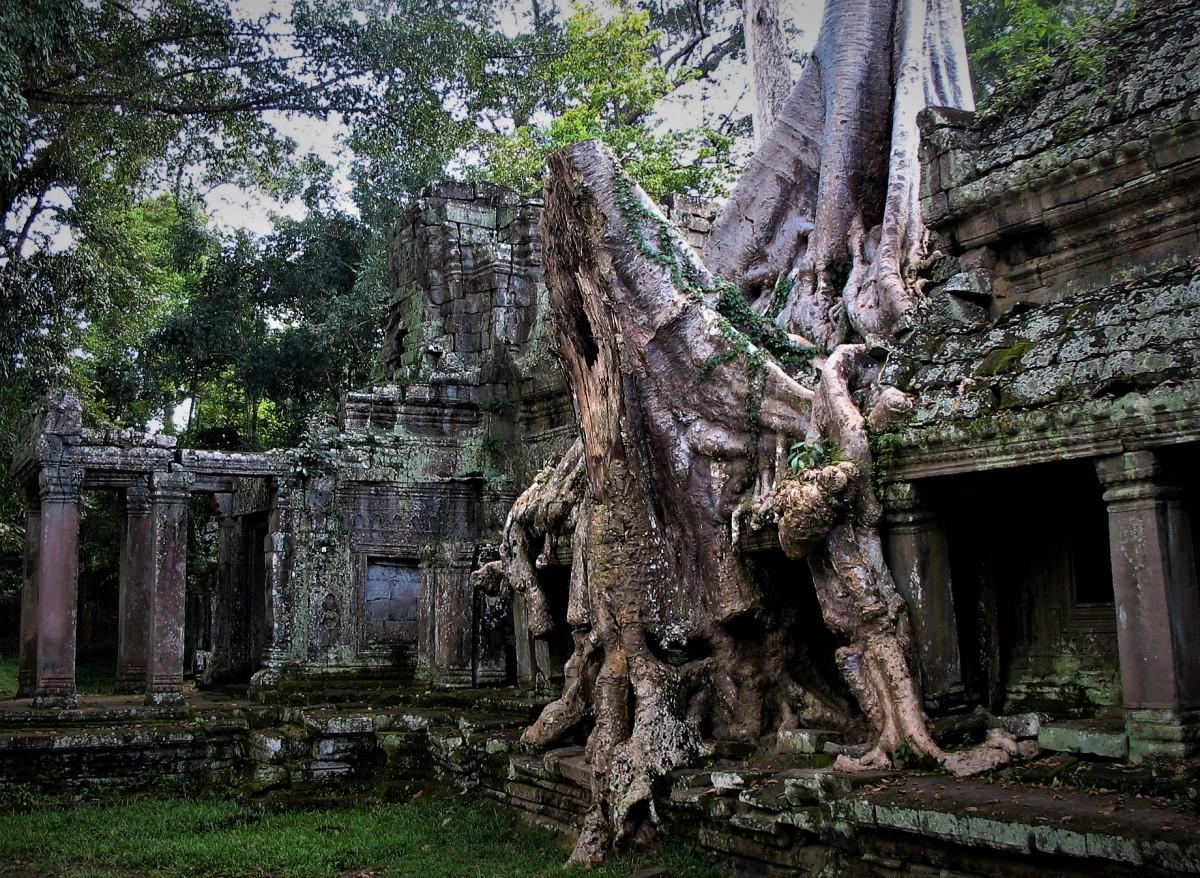 Zdjęcia: Świątynia Praeh Khan, Angkor, Człowiek kontra natura, KAMBODżA
