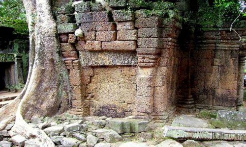KAMBODżA / okolice Siem Reap / zespół Angkor Wat / współistnienie dżungli ze świątynią